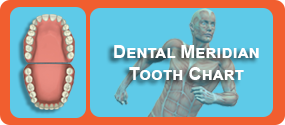 Dentist Sunbury - Dental Meridian Tooth Chart
